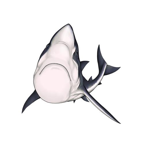 まいごのサメ